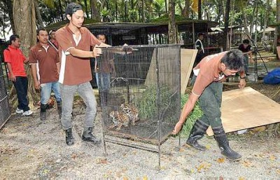 Controversial Saleng Zoo in Kulaijaya