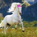unicorn-groupon